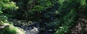 údolí Doubravy 5